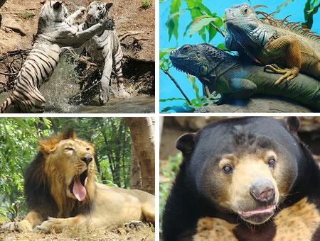 nehru-zoological-park1