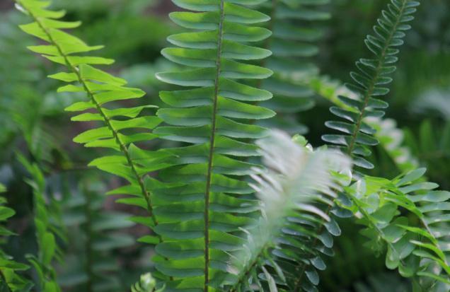 INDOOR_PLANTS